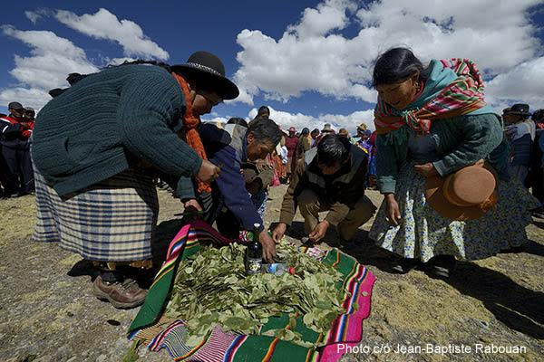 Peru, region of Puno (Titicaca), province of San Antonio De Putina. Inca Quetchua community of Picotani (includes 3 villages Picotani, Toma and Cambria) at more than 4500 meters altitude. Inca Quetchua ceremony of coca to open the Chaccu - wild vicunas are gently gathered to be shorn with no harm.