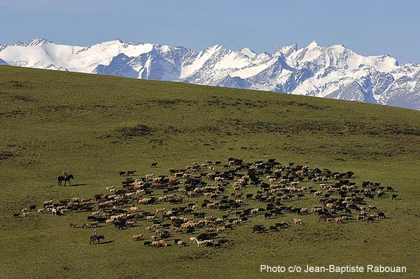 Kyrgyzstan. The seasonal journey to the high altitude pastures in the Naryn region. From May to November, the shepherds drive their herds to different upland meadows between 2500 and 3500 metres in altitude.